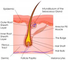There are hair follicles all over the skin.