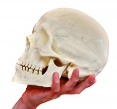 To start a career in physical anthropology, a person needs a four-year bachelor's degree in general anthropology.