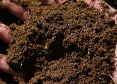 Handful of peat moss, which is often included in soilless mixes.