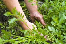 Mulching can prevent later weed growth.