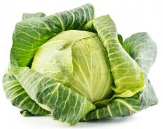 It is common to use green cabbage inside of a cabbage casserole.