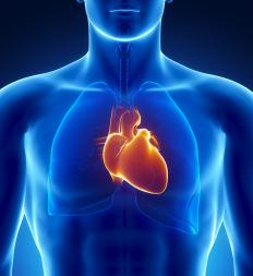 The body's ability to regulate basic functions like the heart beat is an example of a reflex action.