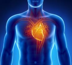 The syncytium located in the heart allows all of the cardiac cells to contract at the same time.