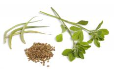 Fenugreek is used in testosterone supplements.