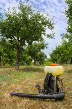Herbicides may be responsible for lawn problems.