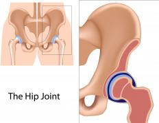 Hip ligaments stabilize the movement of the hip joint.