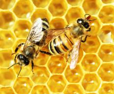 The honey bee is a significant symbol for Utah.