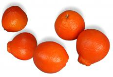 Honeybell oranges are most readily available in January.