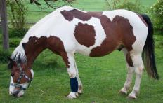 Horses may not wear bandages during dressage.