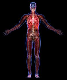 Intramuscular lipomas may be found in the head, legs, neck, and torso of middle-aged individuals.