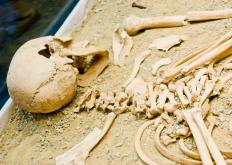 In anthropology, an understanding of bone development can be used to estimate the approximate age at death of ancient human populations.