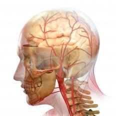 The human brain, including blood vessels that can be involved in a stroke.