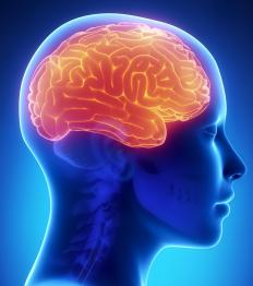 The brain is the most important of all vital organs.