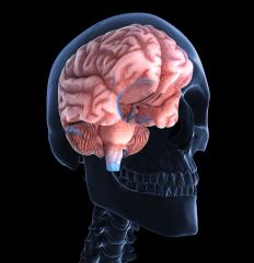 The right basal ganglia, located in the cerebrum, is responsible for movement control and dopamine production.