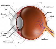 The optic nerve transmits the signals of the eye to the brain.