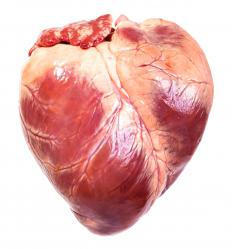 The human heart is comprised of four chambers.
