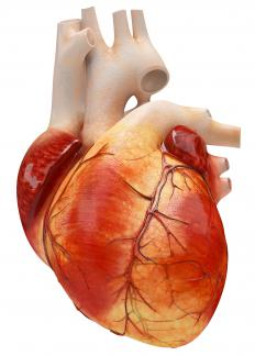 The Purkinje fibers inside the heart can function in place of the SA node if it is damaged or stops working properly.