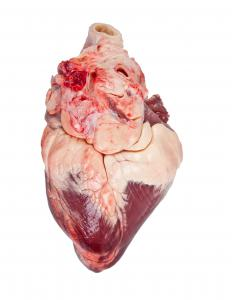 A closed circulatory system includes a pumping heart.
