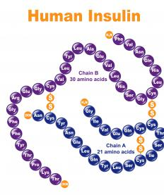 Insulin is a human protein, and plays an essential role in regulation of blood sugar.