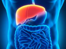 The term hepatic refers to the liver.