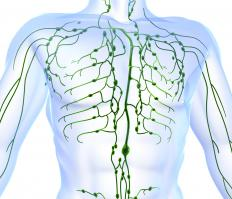 The lymphatic system, shown in green.