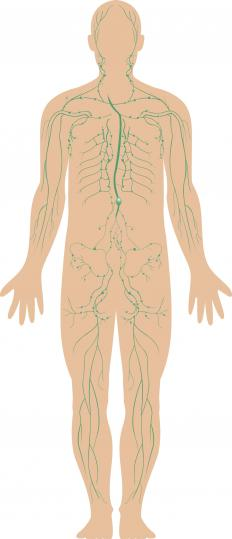 The celiac plexus is the network of nerves in the human abdomen.