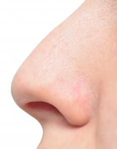 The tough,flexible connective tissue at the tip of the nose is cartilage.
