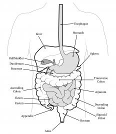 The sigmoid colon is located in the left iliac section.