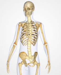 A skeletal system diagram is most commonly created for the human body and skeleton.