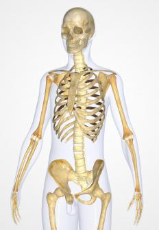 The syncytium plays a vital role in the function of the skeletal system.