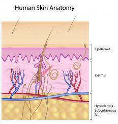 An illustration of human skin, including the subcutaneous fat in beige.