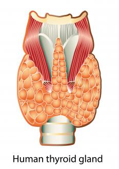 Thyroid lesions occur in and around the thyroid gland.