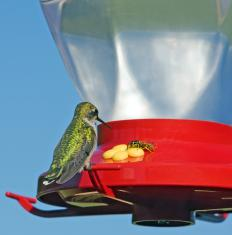A hummingbird on a feeder.
