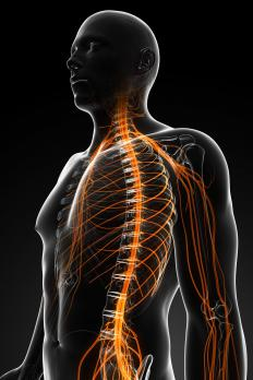 The peripheral nervous system is spread across the entire body.