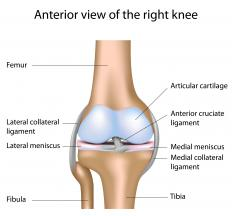A diagram of the knee, showing the anterior cruciate ligament, medial collateral ligament, and lateral collateral ligament.