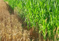Intercropping refers to the agricultural practice of growing two or more crops together in the same field.