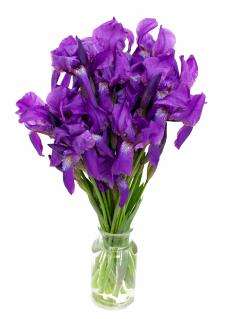 Dutch irises -- a type of perennial -- may be purple or blue.