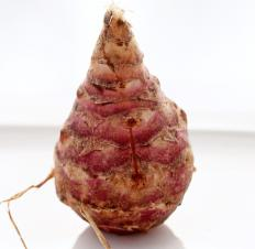 Some believe that Jerusalem crickets may have been named because they ate Jerusalem artichokes.