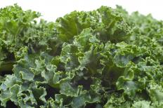 Holland greens are cooked down in a manner similar to kale.