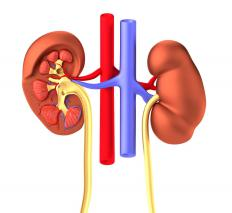 "The word ""renal"" in branchio oto renal syndrome refers to the kidneys."