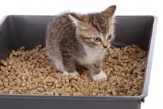 Kitten in a litter box.