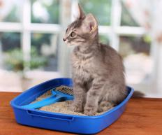 Litter boxes should be cleaned regularly to avoid illness in cats.