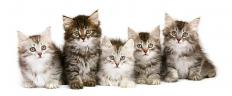 Even cute kittens can cause fear in those who have zoophobia, which is a fear of animals.