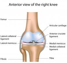 A diagram of the knee, including ligaments and cartilage.