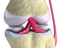 A close up of the knee, with the ligaments in pink.