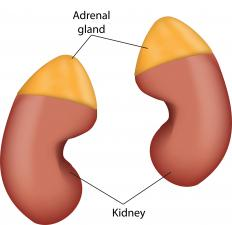 The zona glomerulosa is part of the adrenal gland.