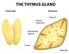 The exact type of treatment for an enlarged thymus depends on the type of tumor.