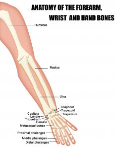 The origin of the palmaris longus is on the humerus.