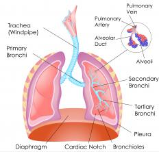 An aortic hiatus is an opening in the diaphragm.