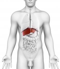 The hepatoduodenal ligament contains the portal triad of the liver.